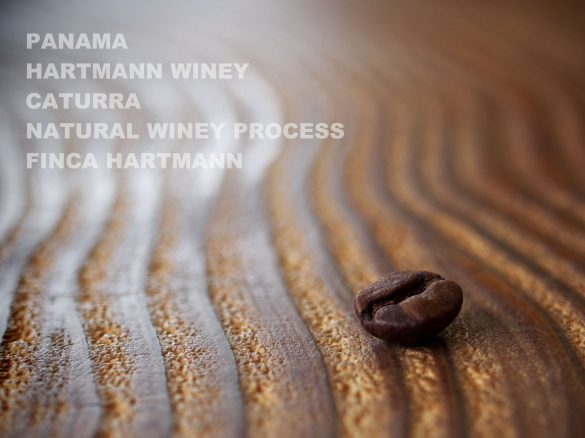 panama hartmann winey catura natural winey process finca hartmann