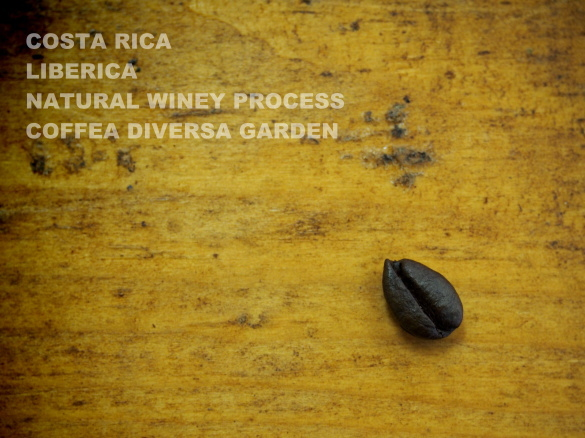 costarica liberica natural winey process coffea diversa garden